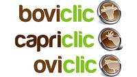 Boviclic-Capriclic-Oviclic